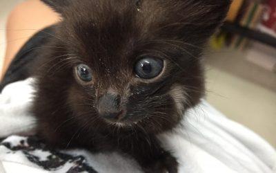 Fostering Kittens in Bangkok!